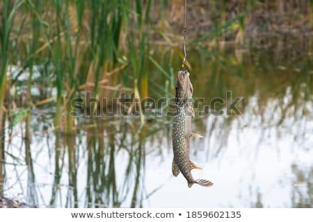 Peixe dia três outro Foto stock © peterveiler