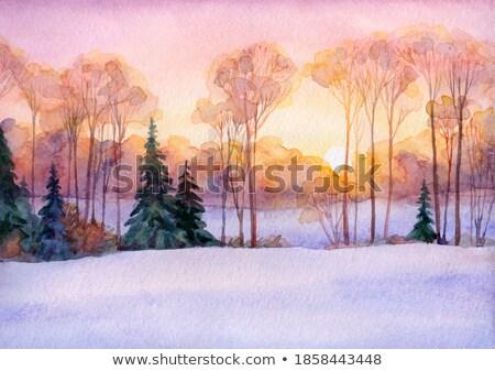 Rurale inverno luce del sole campo frazione alberi Foto d'archivio © Aliftin