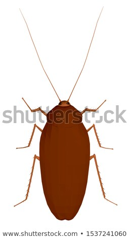 art  Cockroach bug  isolated on white background Stock photo © Konstanttin