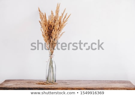Flowers as interior decoration Stock photo © 3523studio