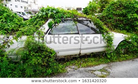 Zielone powrót full frame wspinaczki roślin słoneczny Zdjęcia stock © prill