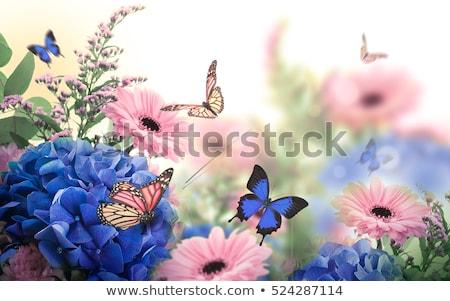 papillon · sauvage · été · fleur · printemps · herbe - photo stock © ryhor