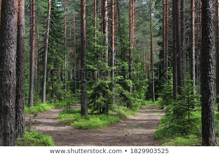 Hierba hierba verde madera forestales verde planta Foto stock © pzaxe