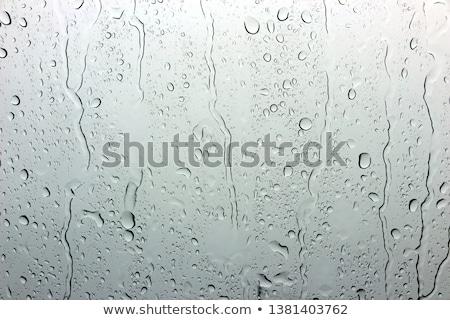 Regendruppels venster groene Stockfoto © bobhackett