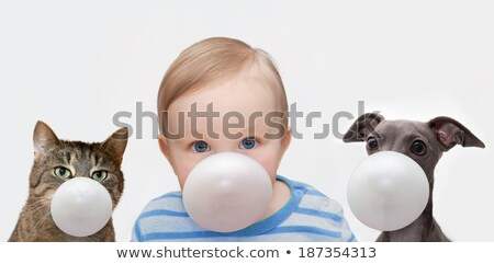 boy make bubble with chew Stock photo © paolopagani