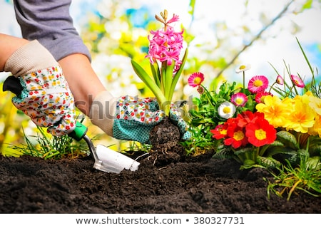 Watering Garden Plants on Patio  stock photo © tab62