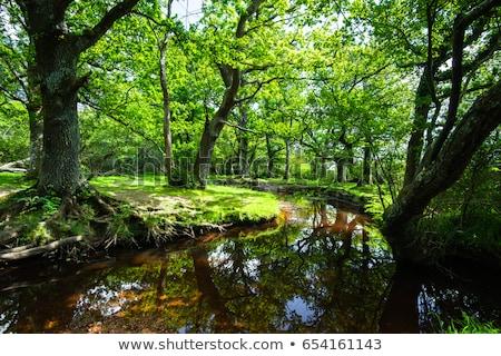 new forest stream stock photo © flotsom
