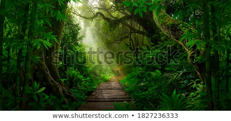 Bamboe regen silhouet aquarel bladeren Stockfoto © artplay