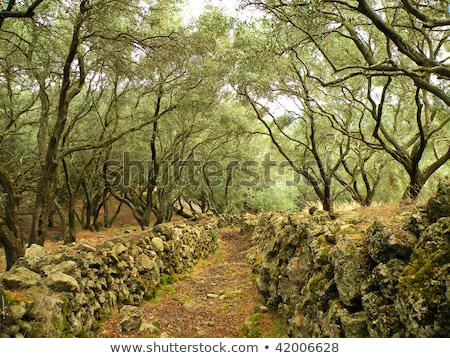 Vecchio oliva alberi isola Grecia erba Foto d'archivio © haraldmuc