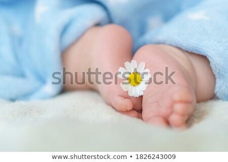 Branco camomila criança em um Foto stock © vetdoctor