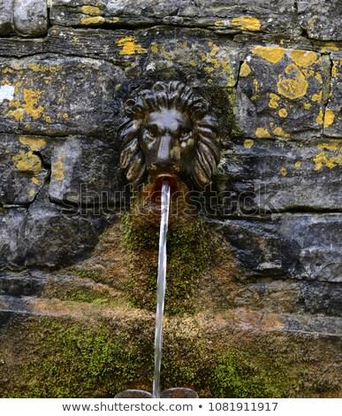 fej · zárt · oroszlán · arc · portré · állat - stock fotó © chrisdorney
