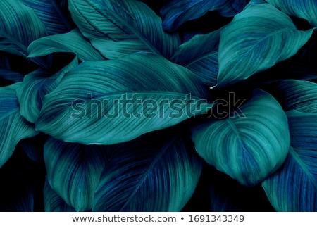 perfecto · grande · grunge · texturas · fondos · papel - foto stock © ilolab