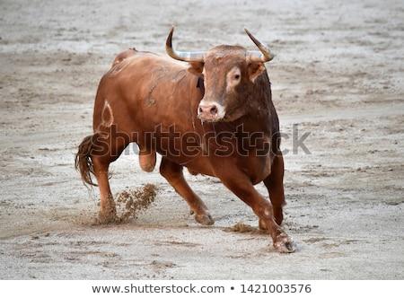 Bruin stier gevaar cartoon stijl natuur Stockfoto © anbuch