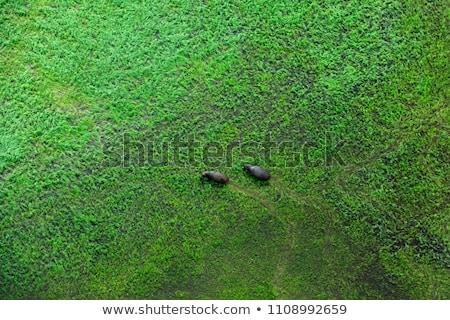 tipikus · kilátás · mocsár · park · virág · természet - stock fotó © pixelsaway