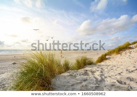 Duin landschap Denemarken zand dag licht Stockfoto © Arrxxx