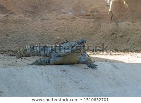 крокодила · открытых · рот · воды · фермы - Сток-фото © witthaya