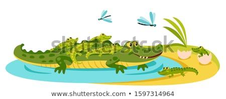 Stock fotó: Krokodil · part · nagy · amerikai · víz · fogak