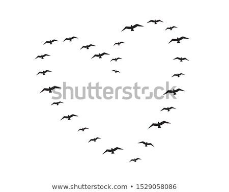voador · aves · coração · vetor · forma · de · coração · gaiola - foto stock © beaubelle