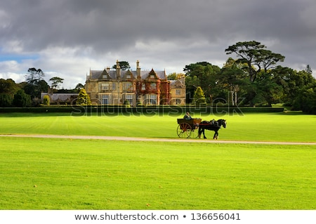 Photo stock: Jardins · parc · Irlande · fleur · herbe · nature
