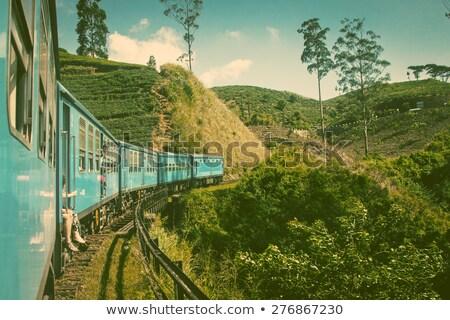 paisagem · chá · verde · plantação · belo · naturalismo · montanhas - foto stock © mikko