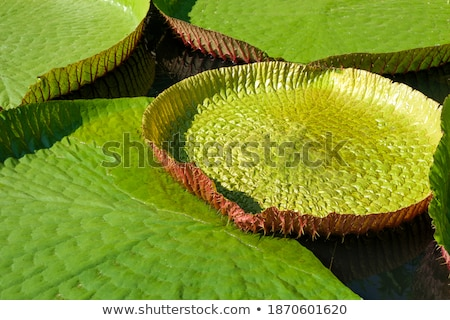 ビッグ 公園 植物 水 池 緑 ストックフォト © compuinfoto