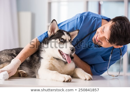 Feliz veterinario labrador mujer nino hospital Foto stock © wavebreak_media