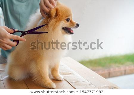 köpek · tarak · arka · plan · güzellik · hayvan · bakım - stok fotoğraf © cynoclub