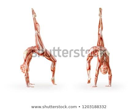 3D · női · orvosi · alkat · csontváz · jóga · póz - stock fotó © kjpargeter