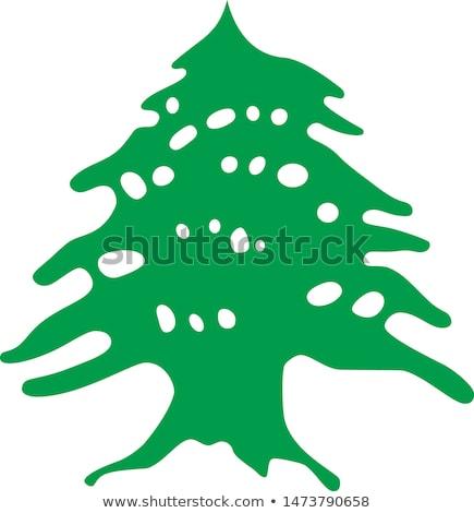 Libano bella antica cedro albero foresta Foto d'archivio © Anna_Om