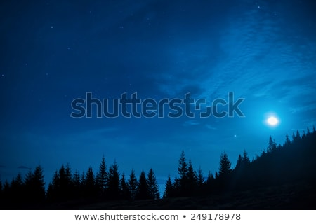Forest of pine trees under moon and blue dark night sky stock photo © vapi