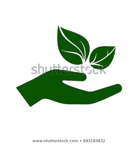 streszczenie · logo · zielone · ludzi · świeże · bio - zdjęcia stock © angelp
