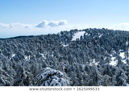 picturesque landscape with snowy mountain and blue sky troodos stock photo © kirill_m