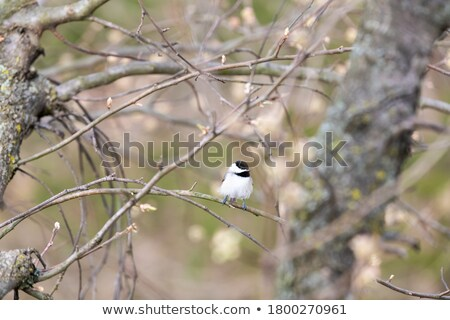 branche · nature · oiseau · plumes · animaux - photo stock © fotoyou