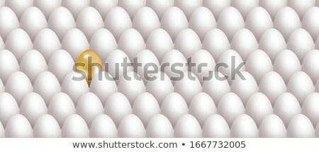 realista · branco · ovo · sombra · comida · frango - foto stock © mediaseller