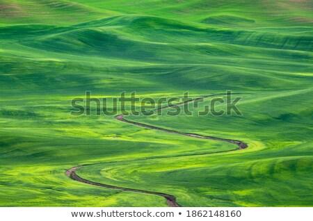 ditch through stock photo © nneirda