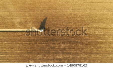 Top view combine harvester gathers the wheat at sunset. Harvesti Stock photo © vlad_star