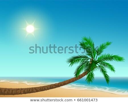 Cennet tropikal plaj hurma ağacı açık gökyüzü güneş deniz Stok fotoğraf © orensila