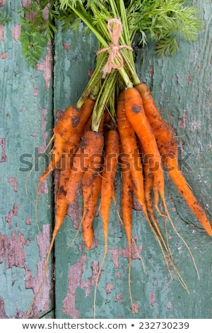 fresh picked carrots Stock photo © IS2