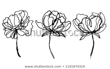 Hand drawn peonies silhouette on black background. Vector white flowers contour.   Stock photo © vasilixa