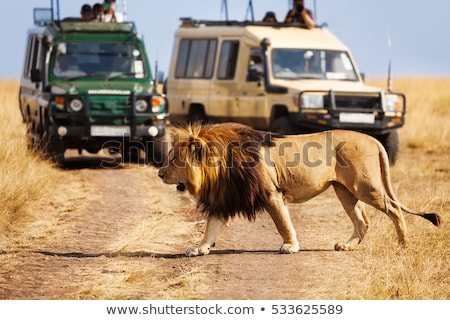 maasai mara national reserve savanna at africa Stock photo © dolgachov