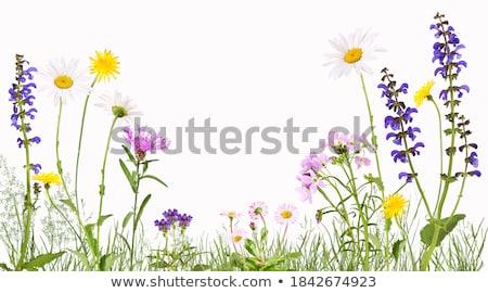 arı · uçan · çiçekler · egzotik · güzel · çiçek - stok fotoğraf © prill