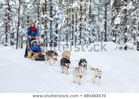Dog sledge Stock photo © IS2