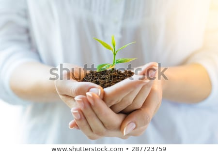Woman holding plant in soil Stock photo © IS2