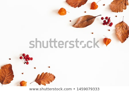 rowan berries and leaves stock photo © neirfy
