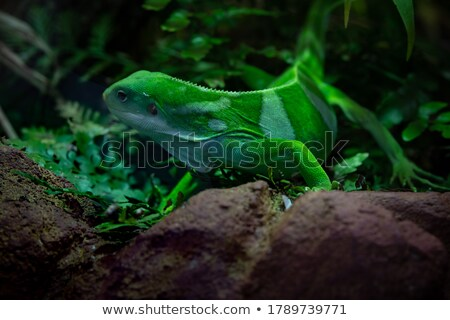Wild animal in grean jungle background Stock photo © bluering