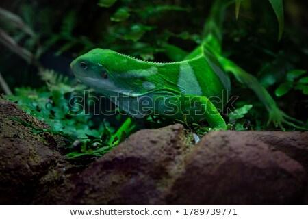 Giungla illustrazione foresta natura arte Foto d'archivio © bluering