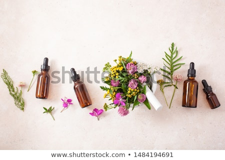 A bottle of yarrow essential oil with fresh yarrow Stock photo © madeleine_steinbach