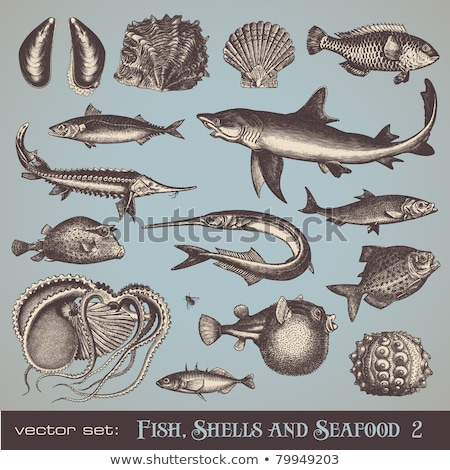 Mackerel Blue Fish Marine Set Vector Illustration Stock photo © robuart