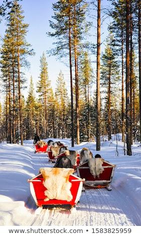 Famiglia renne illustrazione ragazza uomo Foto d'archivio © adrenalina