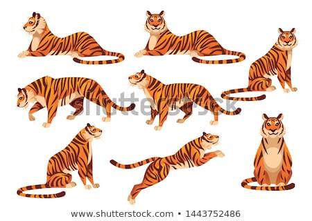 Set of cartoon tiger character Stock photo © colematt